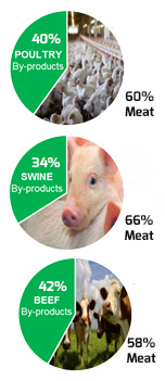 Pie Charts percent of animal consumed