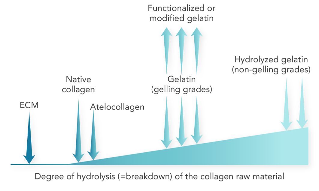 The many physical forms of collagen