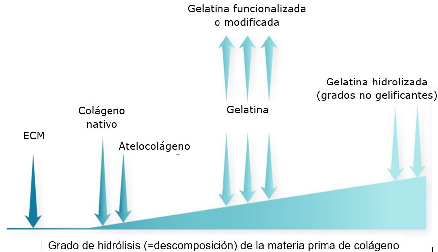 Las muchas formas físicas de colágeno