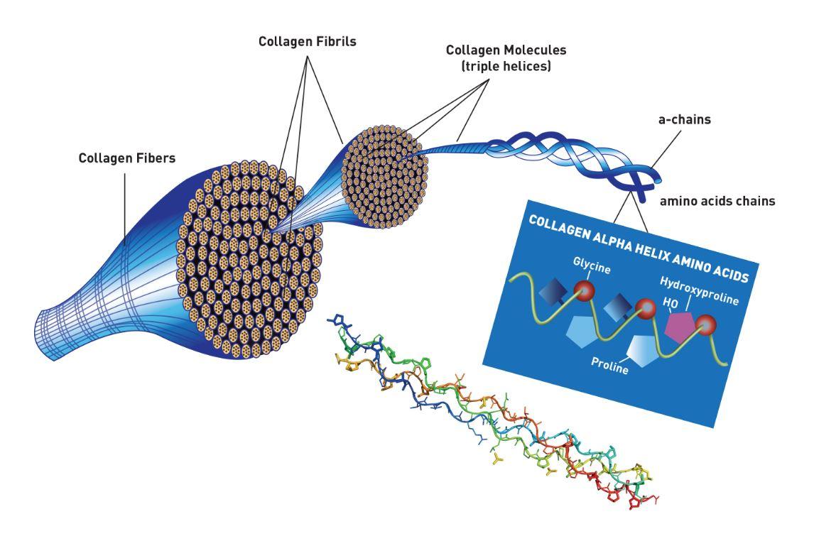 gelatin is a protein