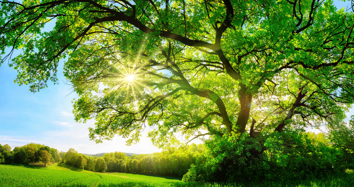 [Translate to Chinese:] Tree with Sunlight