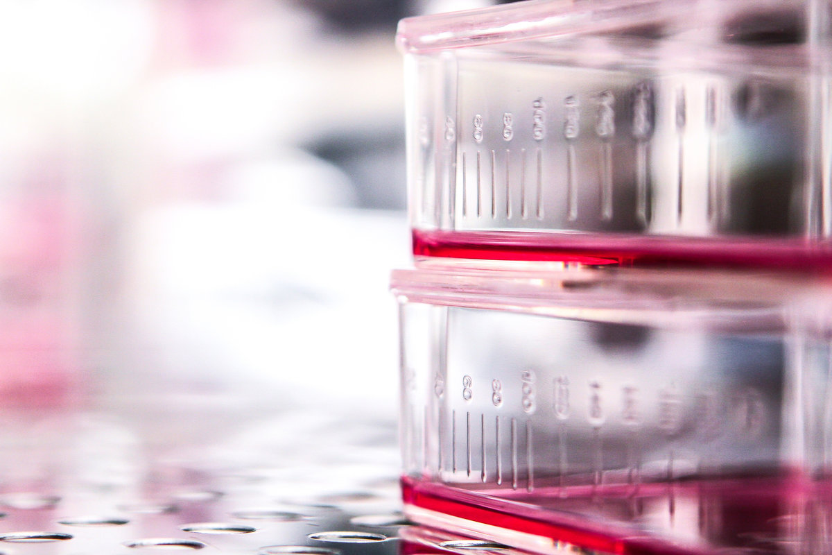cell culture and storage with gelatin hydrogel