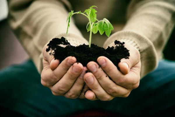 Seedling in man's hands