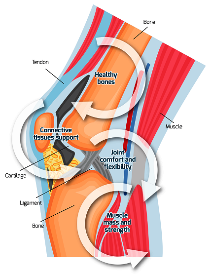 Graphical image of joint and its labeling