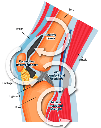 A graphical explanation of joints with its labelled parts