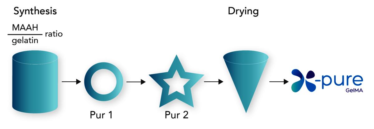 GelMA process